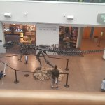 Fossils and Ultimate Dinosaur Exhibits