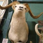 taxidermy and other wall hangings