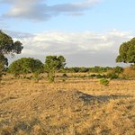 Foto de Duma Camp Maasai Mara