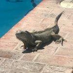 Foto de Playa Los Arcos Hotel Beach Resort & Spa