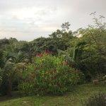 Foto de Roland's Garden Guesthouse