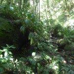 Superb vegetation