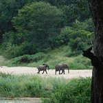 Wildlife at MalaMala