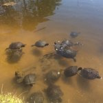 Feed the turtles in the pond on the property !!