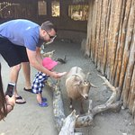 Petting zoo of very tame goats.