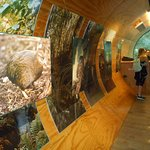 ArghyaKolkata Kiwi Birdlife Park, Queenstown-16