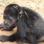 Our little monkey friend at Embera Quera villagee