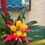 Blooming bromeliad right outside the entrance
