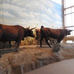 A life size display - the animals that traveled the Oregon Trail