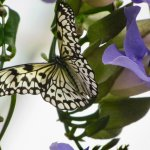 Butterfly on a green and purple plant