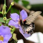 Butterfly purple flower