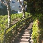 Picturesque foliage around walkway