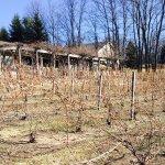 Foto di Bowers Harbor Vineyards