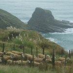 Heard of sheep?