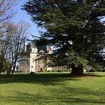 Le cèdre et le Pavillon Béthune du château de Selles sur Cher