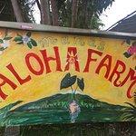 Aloha Farm stand nearby