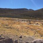 Photo of Laguna Colorada