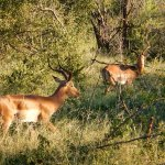 Photo de Kurhula Wildlife Lodge