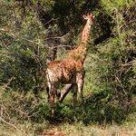 Kurhula Wildlife Lodge Foto