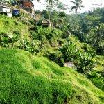 Photo of Jegeg Bali Cycling Tours