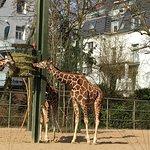 Kölner Zoo Foto