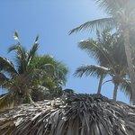 Hotel Los Delfines Foto