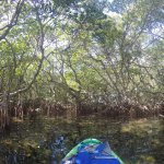 The desk guy's suggestion to explore the mangrove gave us one of the best experiences of our tri