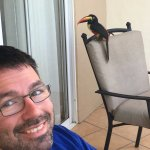 Toucan on our balcony