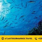 Tours en un Submarino Real en Cozumel, México // Underwater Tours in a REAL Submarine, Cozumel.