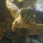 zółw wodny