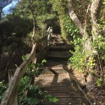 The wooden boardwalk up to Rangitoto's summit