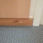 Lizard sneaking into my room.