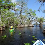 The Lost World of the Blackwater Lake paddle