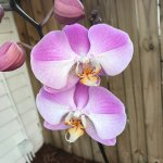 gorgeous orchids EVERYWHERE!