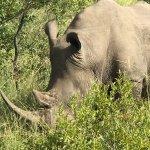 Foto de Savanna Private Game Reserve