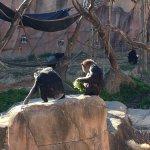 Foto de St. Louis Zoo