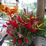 Beautiful flowers were at the hotel. Liked everything about the place