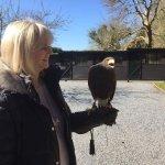 Foto di Ireland's School of Falconry