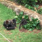 Photo de Melbourne Zoo