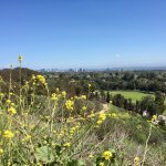 Blooming flowers, the polo field, and DTLA in the distance