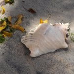 Typical shell washed up