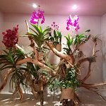 Beautiful orchids everywhere in the hotel!