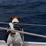 Buster looking for Flying Fish