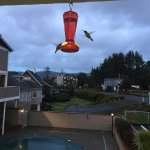 hummingbirds outside office