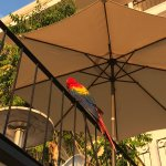 Photo of La Mariposa Hotel