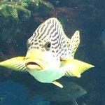 Photo de Aquarium des Lagons Nouvelle Caledonie