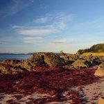 Surrounding areas...red algae