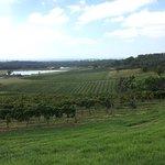Nearby vineyard.
