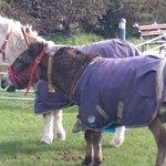Donkey Sanctuary - Free to enter!!