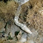 Lots of great snorkling- sea snake on the reef - very cool